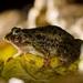 三隻蛙 by 羊西