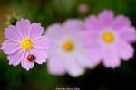 4/23 草田分享花卉攝影