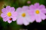 4/23 草田老師-花卉生態攝影