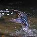 抓魚抓魚抓魚..... by tommy394