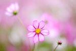 9/22 花卉生態攝影課程4期
