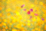 9/22 花卉生態攝影課程 第4期