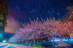 武陵。櫻 夜?美 by 雲林菜吉
