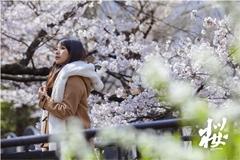京都•櫻|Emily by 藤原克也