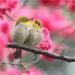 2013年1~4月飛羽版鳥友精選作品展 by joinus