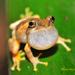 ~ 跟著青蛙去旅行(二) ~