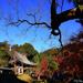 京都楓情---處處驚豔
